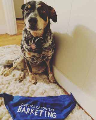 Malka the dog wearing a Director of Content Barketing Bandanna