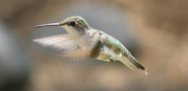 SEO content writing services post hummingbird