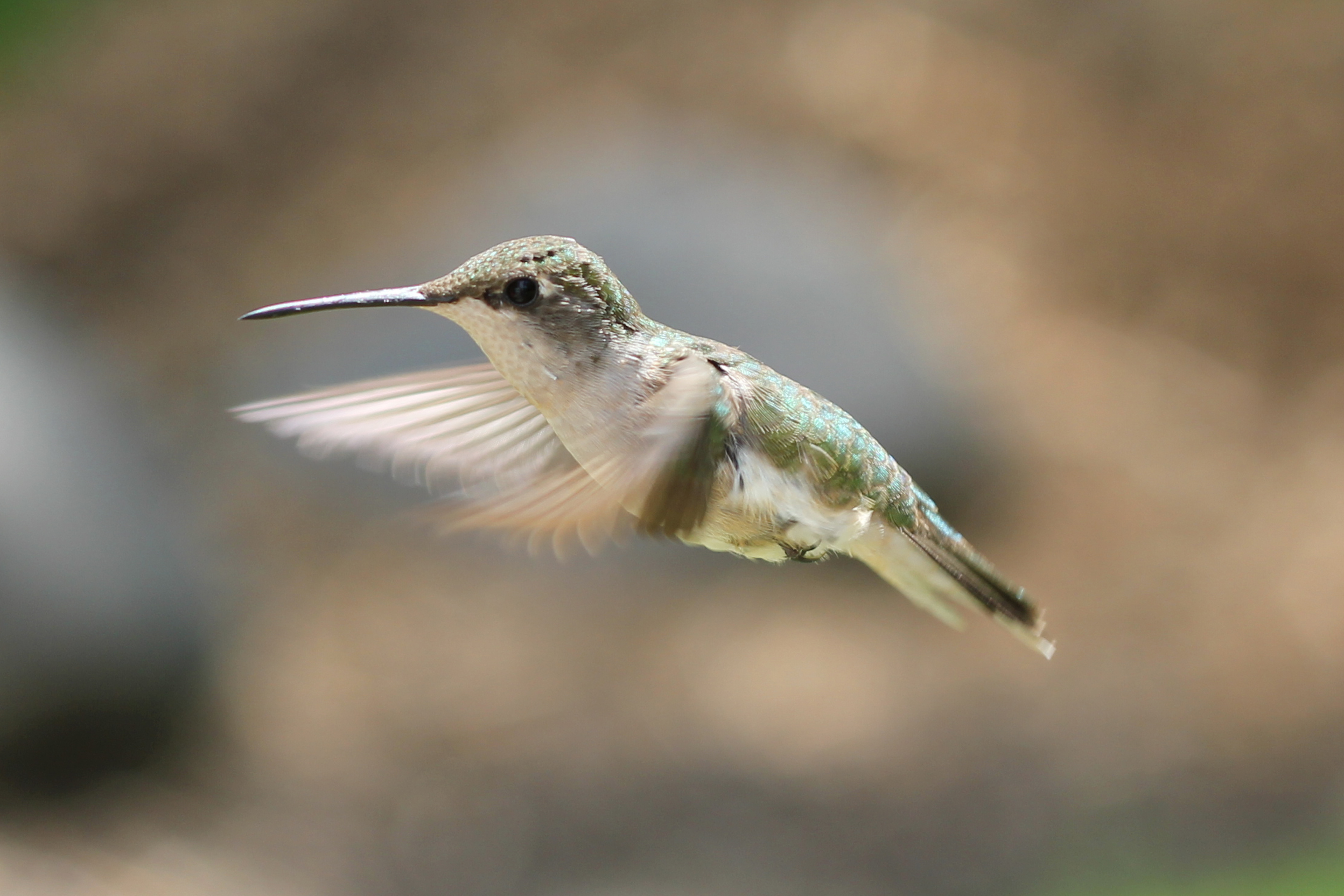 SEO content writing services post hummingbird